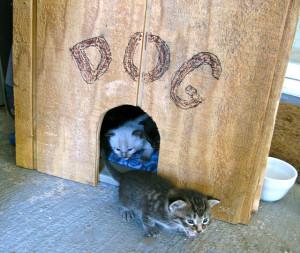 Szigetelt kutyaház