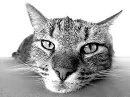 Hogyan védekezünk macska allergia ellen