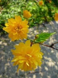 folyton virágzó kerti növények